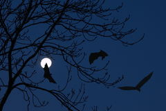Full moon and bats Stock Photo