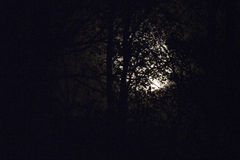 Full moon behind naked tree branches and twigs in night Royalty Free Stock Image