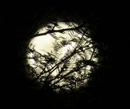 Full Moon Behind Silhouetted Branches Royalty Free Stock Image