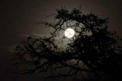 Full moon behind tree Stock Photos