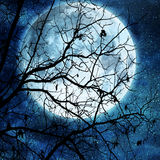 Full moon on blue. Tree branches against full moon Royalty Free Stock Image