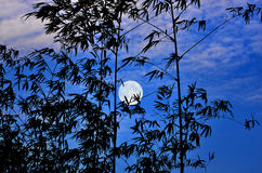 Full moon and blue sky in early morning Royalty Free Stock Photos