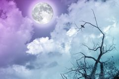 Full moon in cloudy sky with bare branches and small bird. Moon image courtesy NASA. Full moon in cloudy sky with bare branches and small bird. Copy space Stock Photography