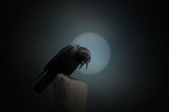 Full moon crow Royalty Free Stock Photography
