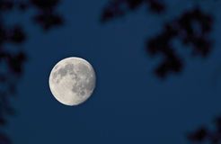 Full moon on the dark night sky Stock Photos