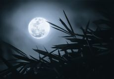 Full moon in the dark sky with branches foreground. Super full moon in the dark sky with branches foreground Stock Photos