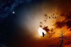 Full moon. Dark sunset sky with full moon, stars, flock of flying ravens, crows. Elements of this image furnished by NASA Royalty Free Stock Photography