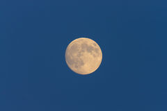 Full Moon in daylight sky Stock Images