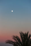 Full Moon in daylight sky and palm Stock Image