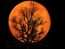Full Moon with Dead Plant royalty free stock images