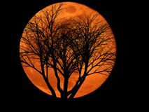 Full Moon with Dead Plant stock photo