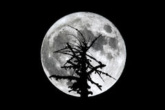 Full Moon dead tree silhouette Stock Photo