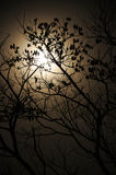 Full moon with dry tree Stock Photography