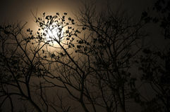 Full moon with dry tree Stock Image