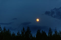 Full moon in evening sky Royalty Free Stock Photos