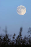 Full moon in the evening sky Stock Photo