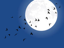 Full moon and flying birds Royalty Free Stock Photos