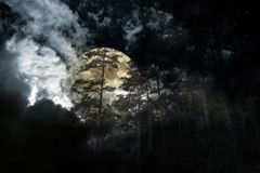 Full moon forest Stock Image