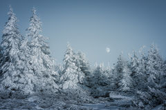 The Full Moon and the frozen forest. A spectacle of Nature with a Full Moon and a frozen forest in the main roles Stock Images