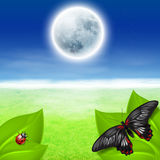 Full moon, green grass and insects Stock Photo