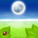 Full moon, green grass and ladybird Stock Photo