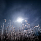 Full moon halo rays - night full moon landscape Stock Images