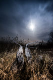 Full moon halo rays - night full moon landscape Stock Image