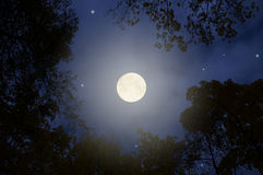Full moon. The image of the beautiful full moon night Royalty Free Stock Images