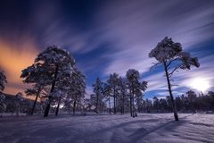 Full moon light over snow covered forest in Heia, Grong area, north Norway stock photography