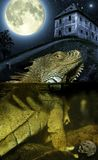 Full moon and lizard Royalty Free Stock Images