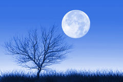 Full moon and lonely tree Royalty Free Stock Photography