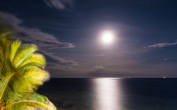 Full moon Mombasa Indian Ocean beach view. Nightview of the Kenyan Indian Ocean at full moon from the Mombasa beach with palm-tree Royalty Free Stock Photography