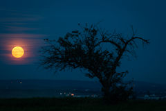 Full moon. Full monn rises with tree in foreground Stock Image