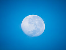 Full moon in the morning. Full moon in the morning with blue clear sky without cloud Stock Images