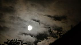 Full Moon Moves in the Night Sky through Dark Clouds and Trees. TimeLapse. The mystical moon rises up against the background of silhouettes of tree branches stock video