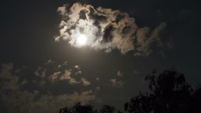 Full Moon Moves in the Night Sky through Dark Clouds and Trees. TimeLapse. The mystical moon rises up against the background of silhouettes of tree branches stock footage