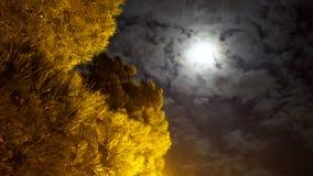 Full moon mystic night in park. Spruce Stock Photos