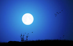 Full moon - Night Stock Photos