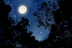 Full moon night. Image of the beautiful full moon night Stock Images
