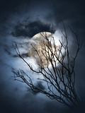 Full moon night. Full moon shining through the clouds and branches Stock Image