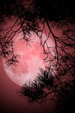 Full Moon Night. This image shows a night with full moon vector illustration