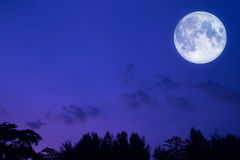 Full Moon Night Forest Landscape Background. A beautiful bright full moon and forest Stock Image