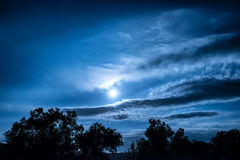 Full Moon night in the forest Stock Image