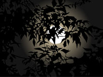 Full moon at night through the leaves. Of the tree Royalty Free Stock Images