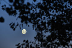 A full moon night, nightscape royalty free stock photo