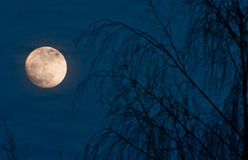 Full moon night scene Royalty Free Stock Images