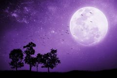 Full moon night With the shadow of a tree And birds that fly back to the nest. Mixed media. Proton purple stock image