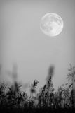 Full moon in the night sky. (focus on grass Royalty Free Stock Photos