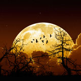 Full moon. Night sky with yellow full moon, stars, flock of flying ravens, crows, tree silhouette. Elements of this image furnished by NASA Royalty Free Stock Photo