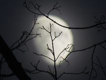 Moon branches Stock Photography